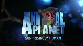 animalplanet